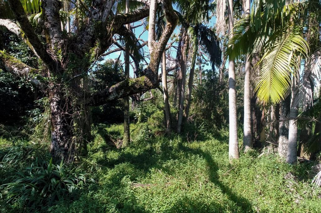 Ipuaiwaha St photo