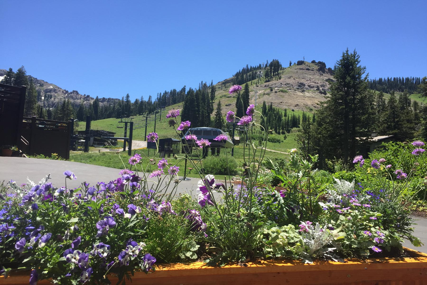 5701 Tiger Lily Court Site 14