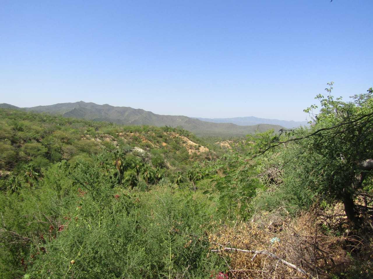 Predio Palo Verde
