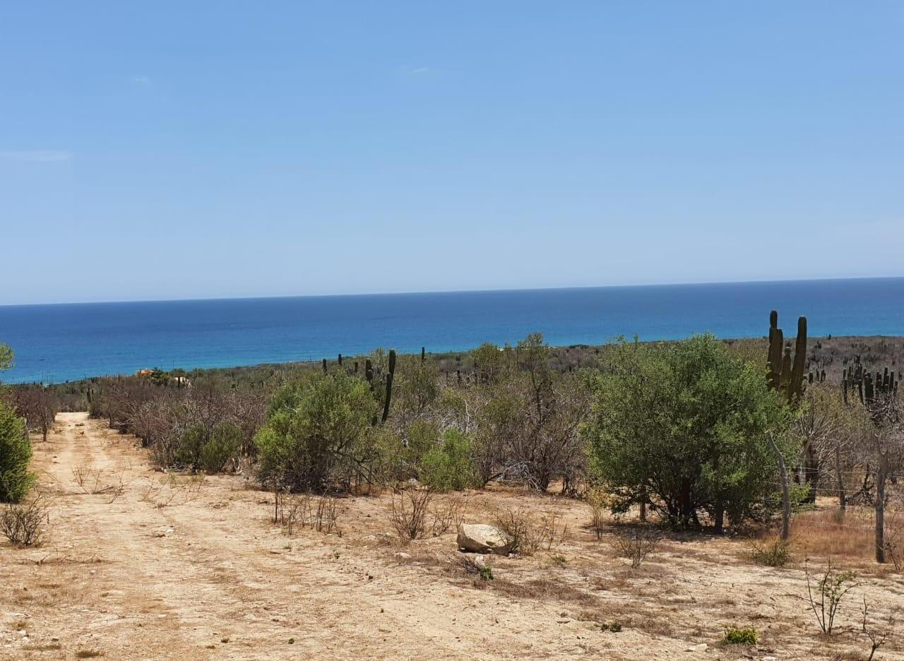 El Cardonal coast road