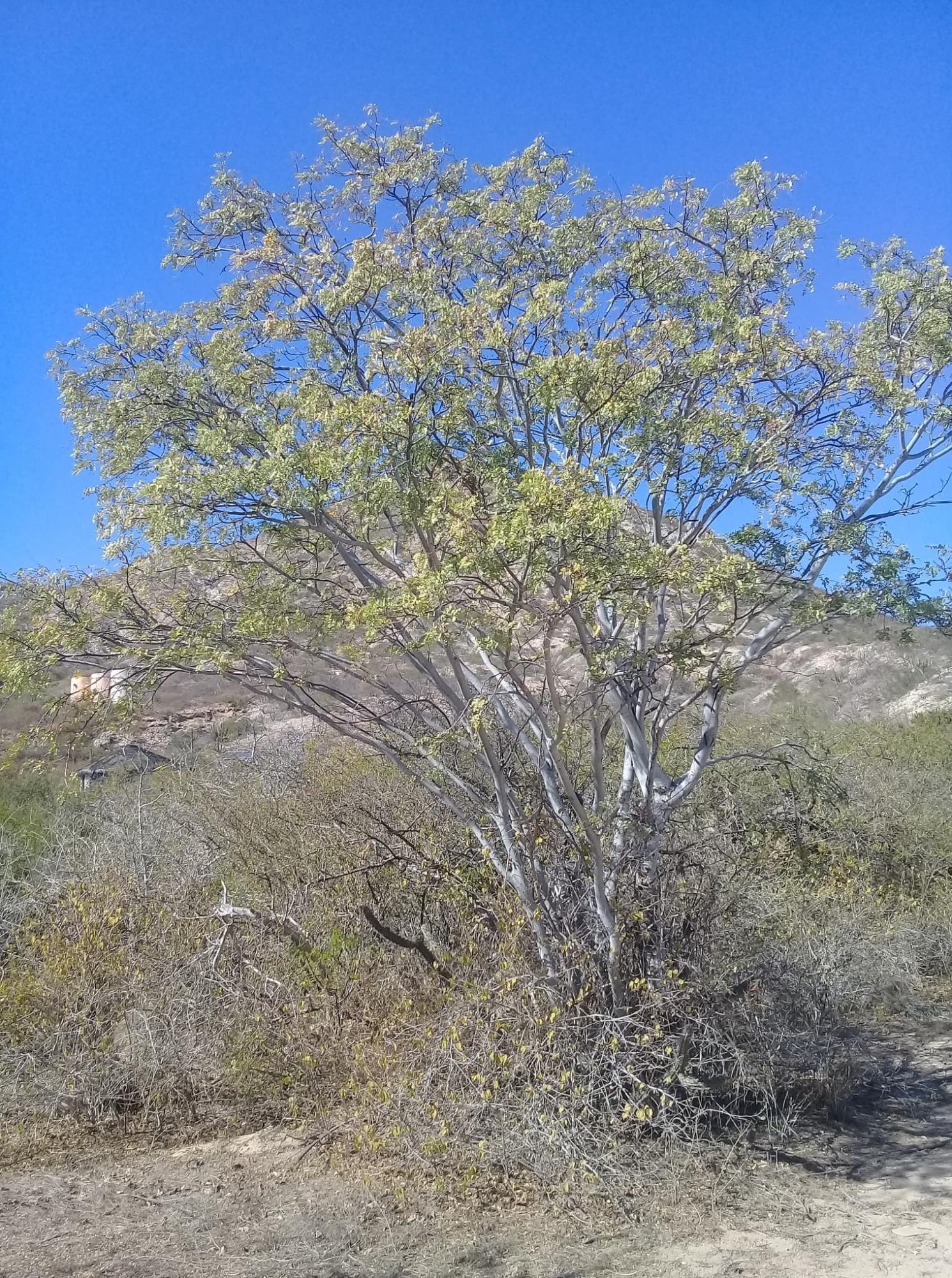 Phase 2 - Cabo Pulmo