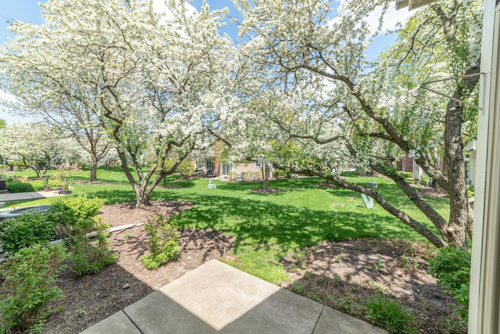 247 Spring Creek  Circle photo