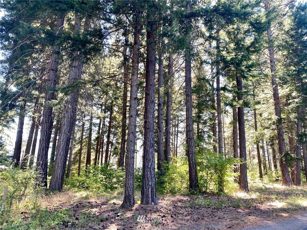 1570 Pinegrass Loop  photo