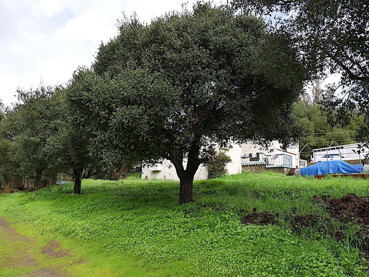 6423 Hidden Oaks LN photo